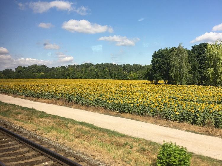 Trem - paisagem de girassois
